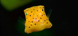 20 Jenis Ikan Laut Paling Pelik Di Dunia