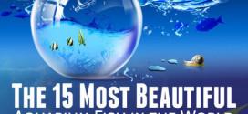 15 Ikan Akuarium Paling Cantik Di Dunia